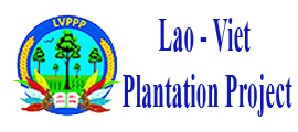 Lao - Viet plantation Project