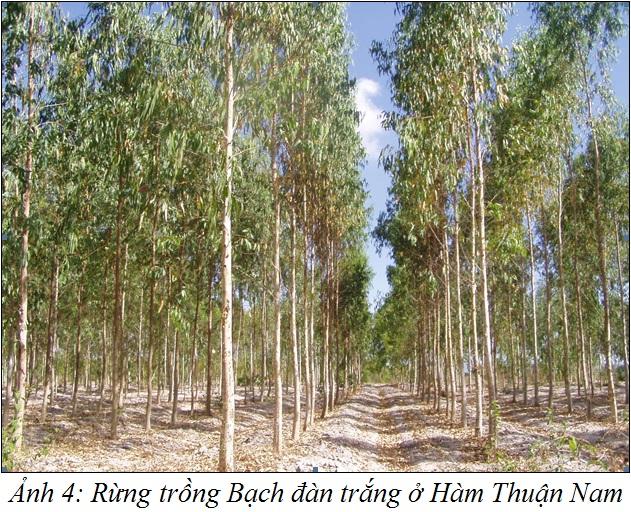 BachdanTrang