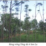 TongDu