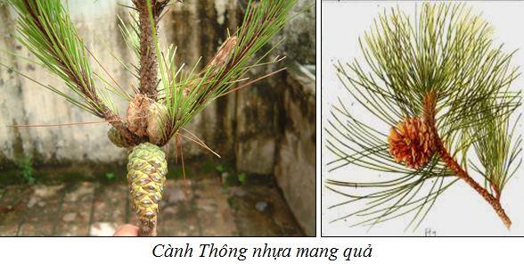 Thongnhua1