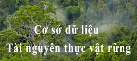 Cơ sở dữ liệu Tài nguyên thực vật rừng